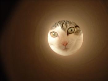 猫の好奇心 穴