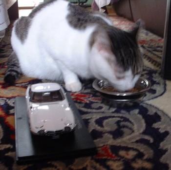 ネコとプラモデル