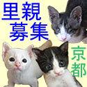 京都猫 二