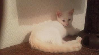 佐野猫 10