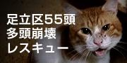 adachi55cats.jpg