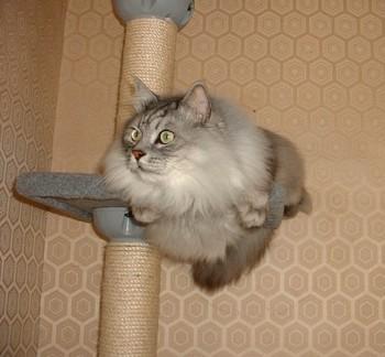 tower cat