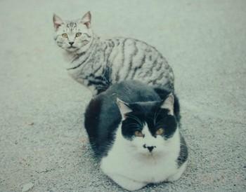 猫の集会 弐