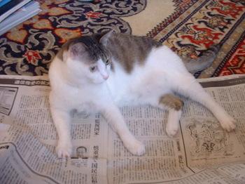 イヴリンと新聞