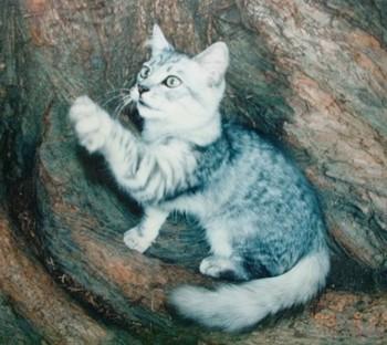 ちょっかい 猫